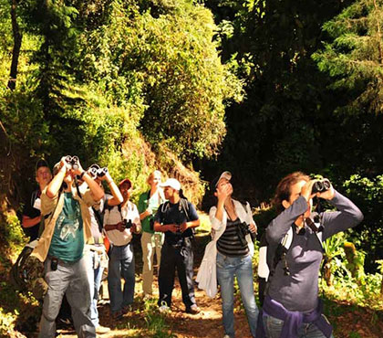 Birdwatching-tour-Observacion-de-Aves-things-to-do-in-Antigua-Guatemala-Tours Around-Antigua-Guatemala-V1
