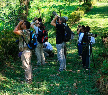Birdwatching-tour_Observacion-de-Aves-things-to-do-in-Antigua-Guatemala-Tours-Around-Antigua-Guatemala-v3