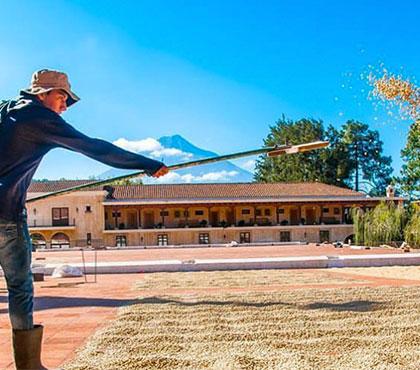 Coffee-tour-tour-de-cafe-finca-filadelfia-resort-coffee-plantation-antigua-guatemala-around-antigua-guatemala-guatemala-city-v3