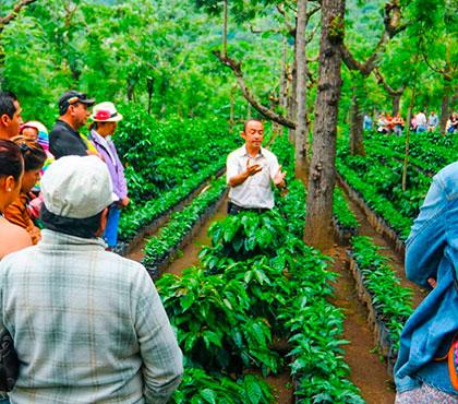 Coffee-tour-tour-de-cafe-finca-filadelfia-resort-coffee-plantation-antigua-guatemala-around-antigua-guatemala-guatemala-city-v4