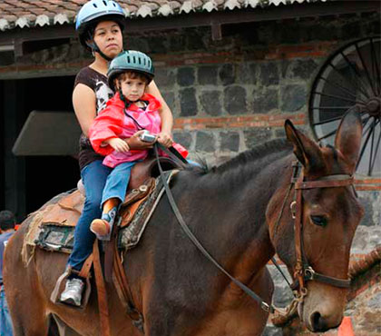 tour-de-mulitas-en-antigua-guatemala-mule-ride-tour-in-antigua-guatemala-around-antigua-guatemala-v1