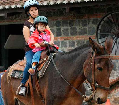tour-de-mulitas-en-antigua-guatemala-mule-ride-tour-in-antigua-guatemala-around-antigua-guatemala-v1