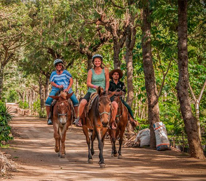 tour-de-mulitas-en-antigua-guatemala-mule-ride-tour-in-antigua-guatemala-around-antigua-guatemala-v3
