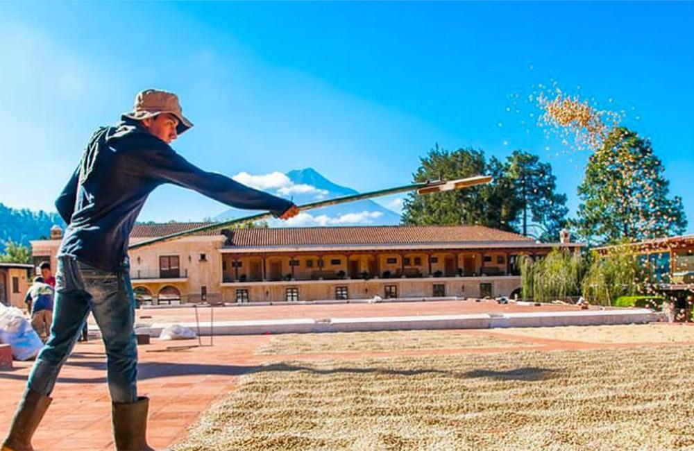 Things-to-do-in-Antigua-Guatemala-Actividades-en-Antigua-Guatemala-Around-Antigua-Guatemala-Coffee-Tour-Antigua-Finca-Filadelfia